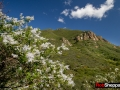 California lilac or ceonothus in bloom, Santa Monica Mountains National Recreation Area, California.